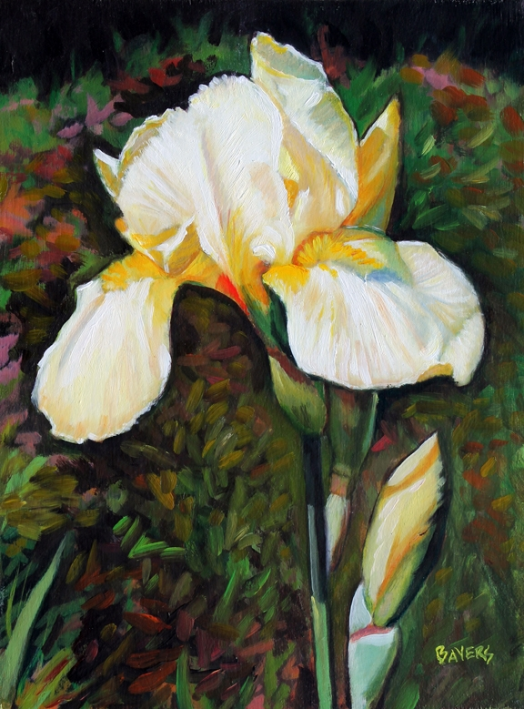 Light Yellow Iris