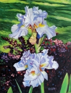 2 Light Blue Iris