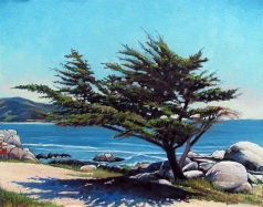 Tree with shadow at Pebble Beach